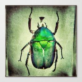 Iridescent Green Canvas Print