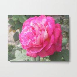 Pink Perfection  Metal Print
