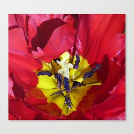 Centre of a Tulip Canvas Print