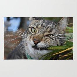 Cat Snack Rug