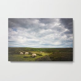 Sheep grazing in North Yorkshire Metal Print