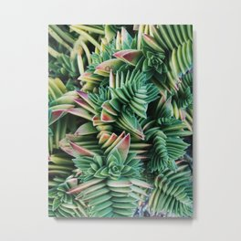 Tropical succulents Metal Print