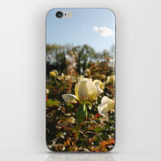 Rose Garden Sunshine iPhone & iPod Skin
