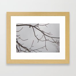 Cold Grey Sky Behind Leafless Tree Branches Framed Art Print