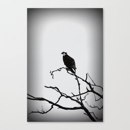 Preying Canvas Print