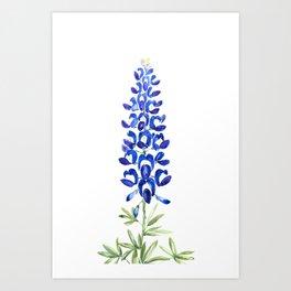 Texas bluebonnet in watercolor Art Print