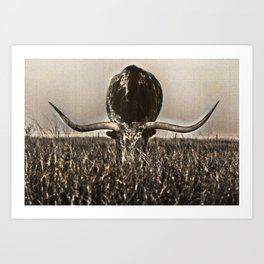 Old Photo of Longhorn Art Print