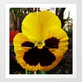 Golden Black Eyed Pansy Violet Yellow Flower Art Print