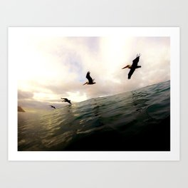 Sea Birds - Encinitas, CA Art Print