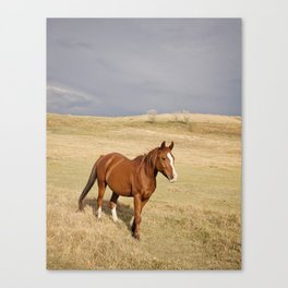 Horse in Stormy Landscape Photograph Canvas Print