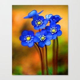 Wonderful Wild Flowers Canvas Print