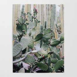 Cacti Heaven Poster