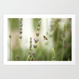 Buzz Bee Art Print