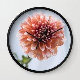 Dahlia in Soft Light Wall Clock