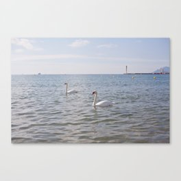 Riviera Swans Canvas Print