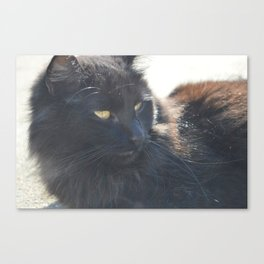 Cat in the Sun Canvas Print