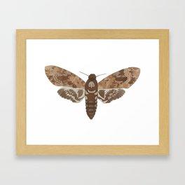 Death's Head Moth Hawkmoth Brown Insect Digital Watercolor Framed Art Print