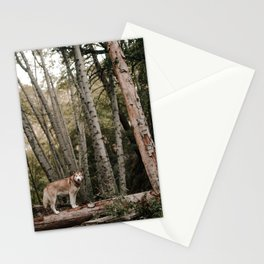 Husky in Forest Stationery Cards