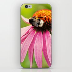 Bee Love iPhone & iPod Skin