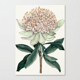 Waratah Botanical Canvas Print