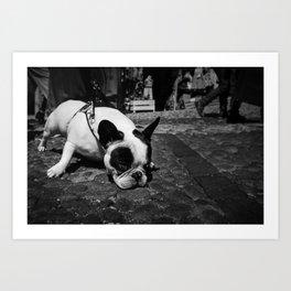 Dog - Bouledogue  - B&W Art Print