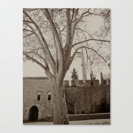 """Gardens (tree) to the NE of Sultan Ahmed Mosque (""""Blue Mosque"""", Istanbul, TURKEY) Canvas Print"""