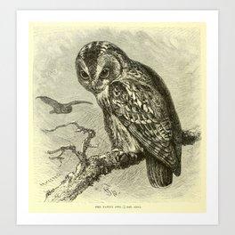 Tawny owl (1893) Art Print