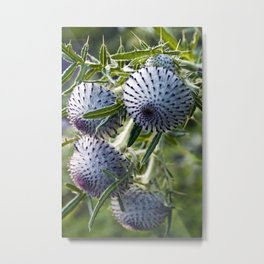 Blue Thistle Heads - Botanical Garden - Berlin Metal Print