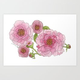 Pink Watercolor Peonies Art Print