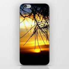 Sunset between Norfolk pine Needles iPhone & iPod Skin