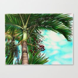 Manila Palm Tree - Hawaii Canvas Print