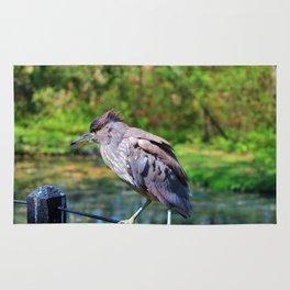 Immature Night Heron Rug
