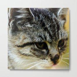 Animal portrait of tabby kitten, adorable small cat Metal Print