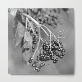 Black Elderberry Metal Print