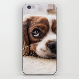 Cute dog with Big Innocent Eyes iPhone Skin
