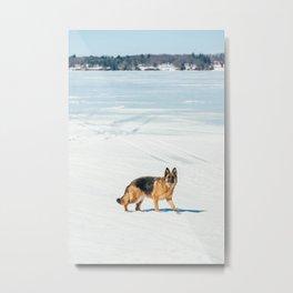 German Shepherd in the Snow Metal Print
