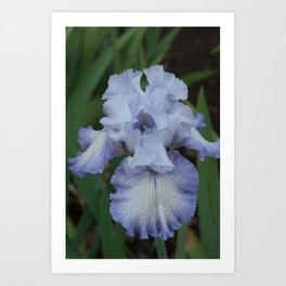 Blue Iris by Teresa Thompson Art Print