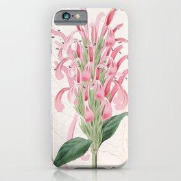 Flower 1397 justicia carnea Flesh coloured Justicia15 iPhone Case