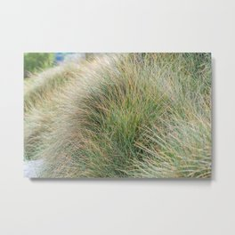 Beach Grass, New Zealand  Metal Print