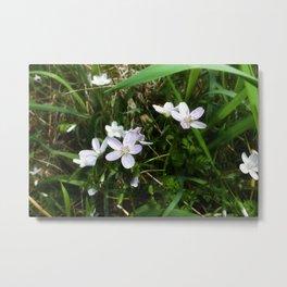 Spring Beauty 05 Metal Print