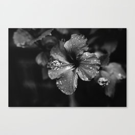 Black & White Hibiscus Canvas Print