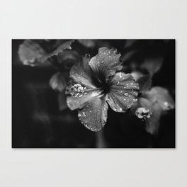 Black & White Hibiscus Canvas Print