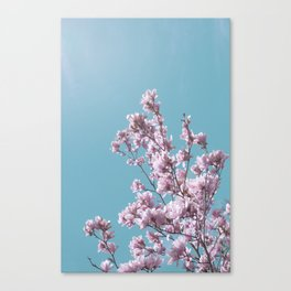 SPRING MAGNOLIA FLOWER TREE, pink on turquoise Canvas Print