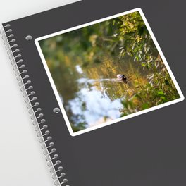Duck pond Sticker