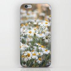 Wild Daisies 4134 iPhone & iPod Skin