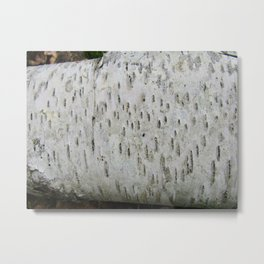 Birch Bark on a Fallen Tree Metal Print