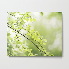 Green Nature Photography, Leaves Tree Branches Photo, Spring Leaf Trees Branch Botanical Metal Print