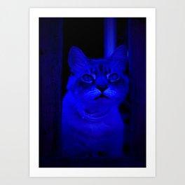 Kitty in Blue Light Art Print