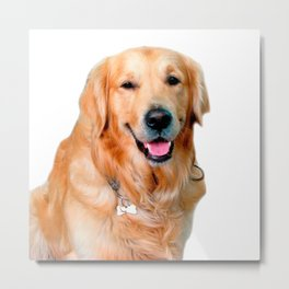 Beautiful Dog Golden Retriever and Your Bone Metal Print