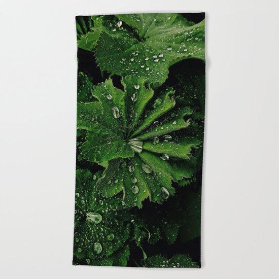 Dew On Rose Scented Geranium Leaves Beach Towel